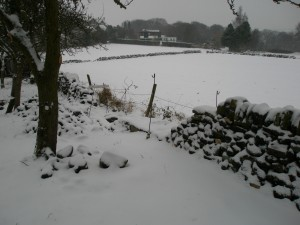 Snow stops play on the dry stone walling