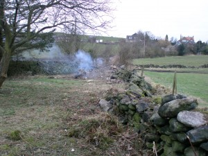 With the shed now gone, it is time to finally clear out the last part of the orchard