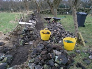 Still working in the orchard.  You can just some a couple of pale grey bricks hidden at the bottom of the right hand side of the wall.  The first 5 courses on this side are hidden underground since this provides an opportunity to get rid of some of the material that we have removed.