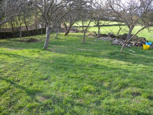 It will never be a lawn, but it is a lot tidier now!