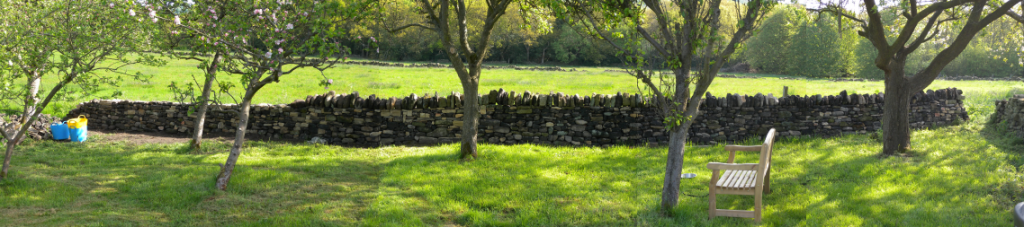 This is the current extent of the rebuilt dry stone wall in the orchard at the end of day 23.