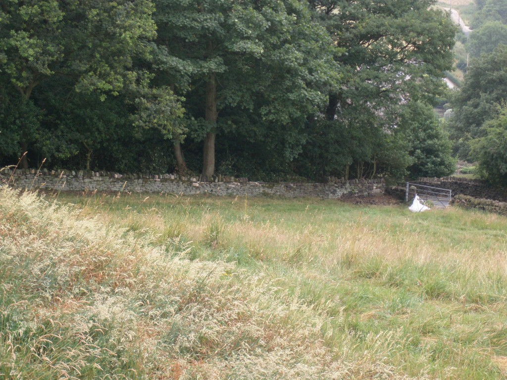There are some missing coping stones, but the wall along Hagg Wood is now largely complete.