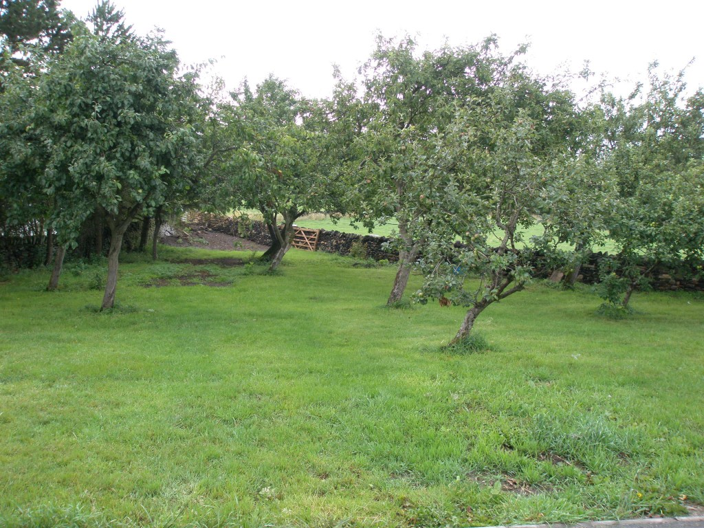 A combination of some very hot weather followed by some very wet weather has really brought the orchard to life.