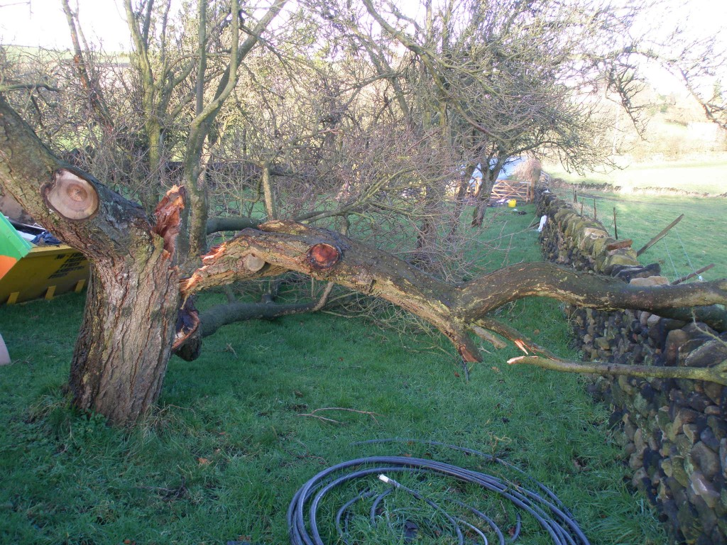 One of the larger branches fell and hit the dry stone wall that we built last year.  Another ended up in the skip.