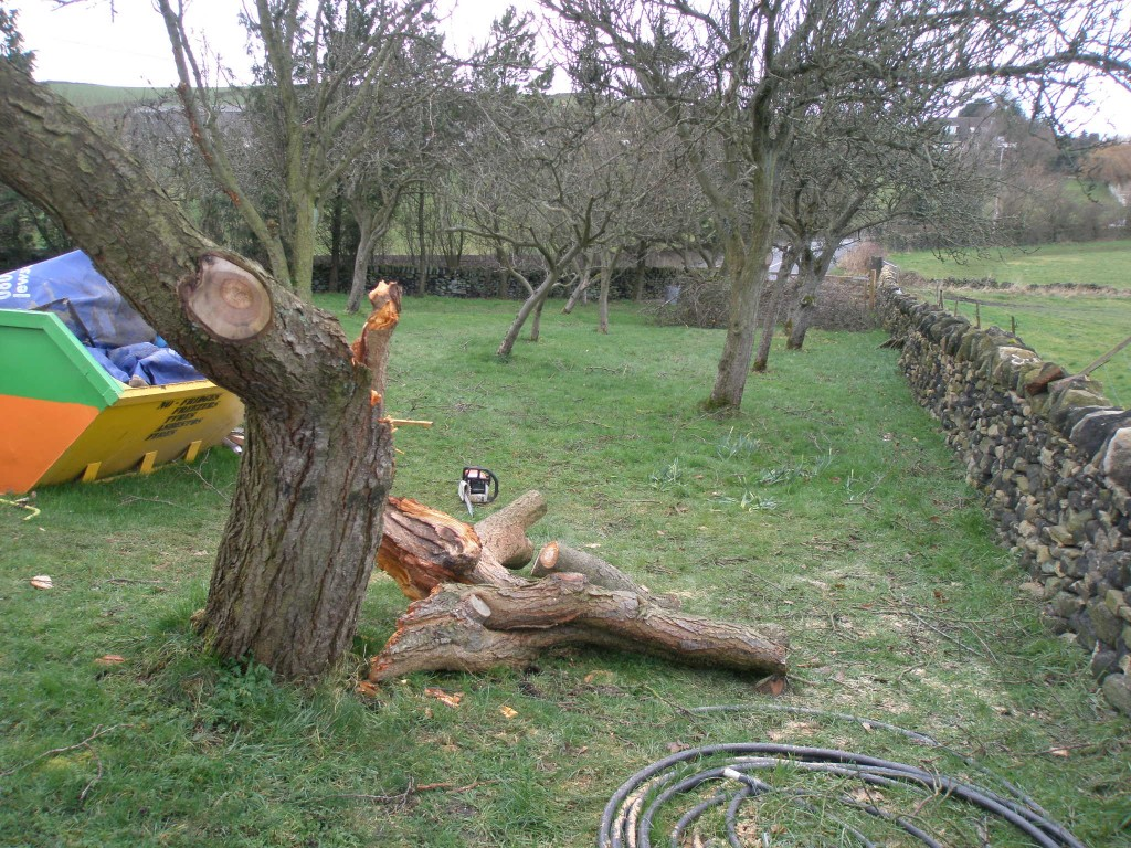 It didn't take long with the chainsaw to cut up the smaller branches and then cut the larger ones into logs.  Unfortunately, some of the bigger bits are jsut too big for my chainsaw.