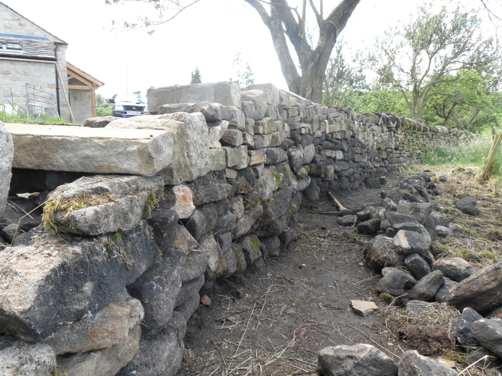 This section of wall bends around from the orchard to from the edge of the wall in the top field.  You can't use string to line up the wall here, so it is all done by eye.  The roots from the trees also mean that digging the foundations can be difficult.  In some places, we have had to follow the line of the old wall - even when it wasn't straight!