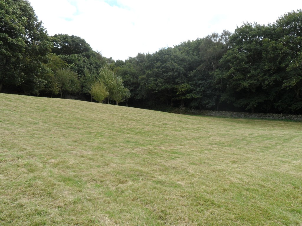 The grass in the bottom field is starting to look good.  We have also had a go at sorting out the young trees in the far corner.  We have removed the lower branches (essentially lifting the crown) which has meant that we can mow around the trees with the new mower.