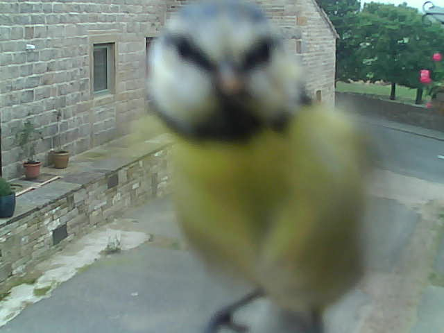 Although image is blurred, I think that this is a Blue Tit (probably a little too close up!).